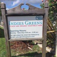Indies Greens Organic Aquaponics Farm